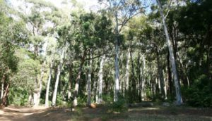 trees at Tokai Forest